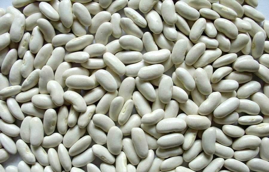 خرید لوبیا خمین